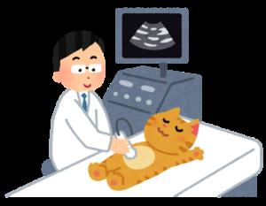 ぼうこう内の尿量を超音波で測定!